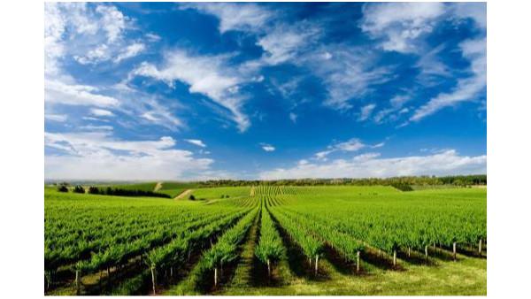 中巴首个农业与产业合作信息平台正式启动