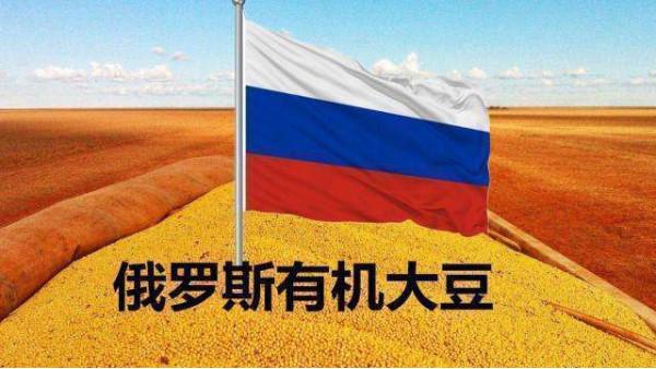 首批俄大豆进入中国,美大豆失去市场份额