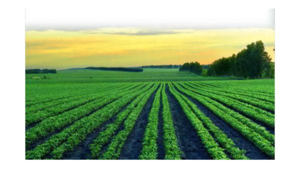 海关总署公告:关于积极推进埃塞俄比亚绿豆准入工作