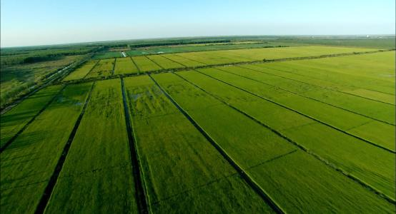 采取有力措施,抓好农业种质资源普查和保护