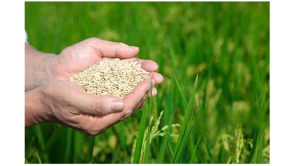 今年粮食品种库存供应充裕安全