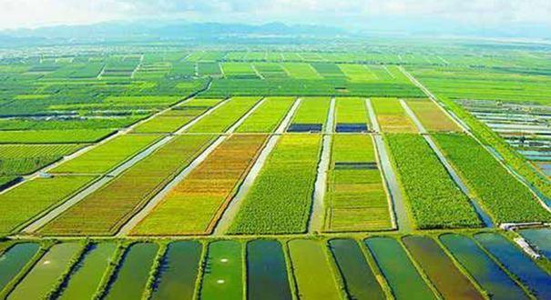 农业农村部确保农业丰收农村同步全面建成小康社会