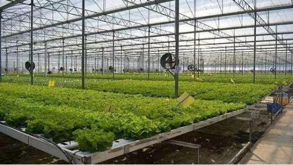 2021世界数字农业博览会将在深圳举行