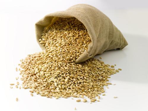 农业农村部:全力做好小麦条锈病防控
