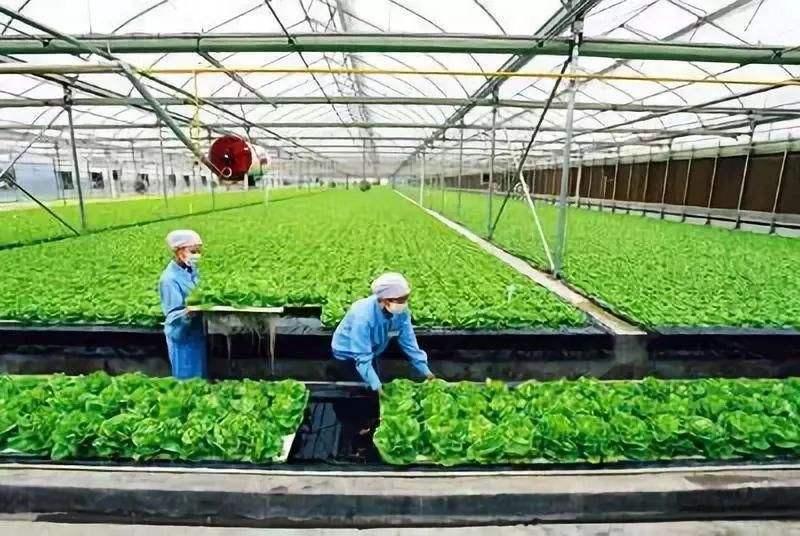 新农业农村建设将以数字化发展为主