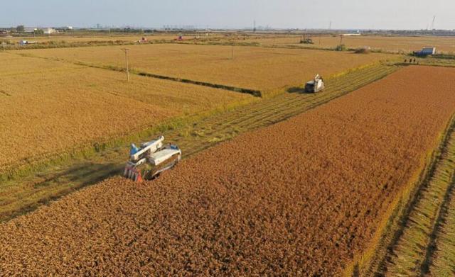 1农业农村部:今年秋粮面积稳中有增