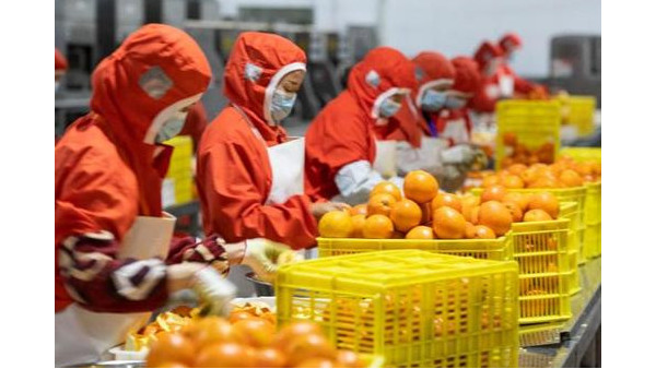 疫情防控好转,农产品价格平稳下降