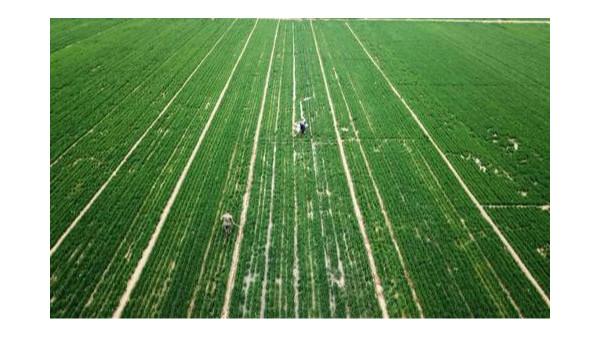 农业农村部:扩大耕地轮作休耕规模到4000万亩
