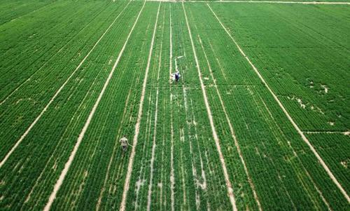 农业农村部:春播作物用种供应总体充足