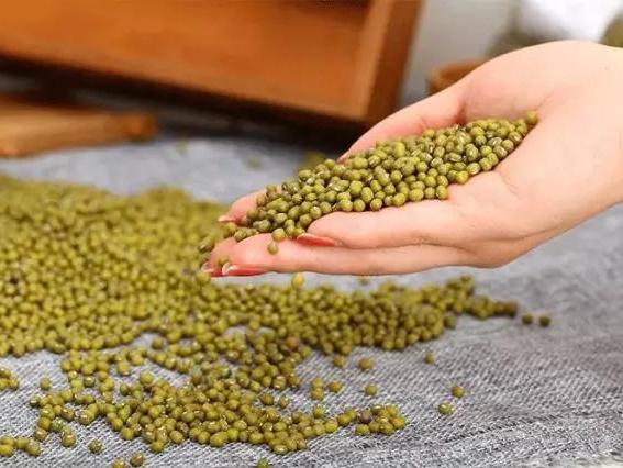听说绿豆解中药,是真的嘛?