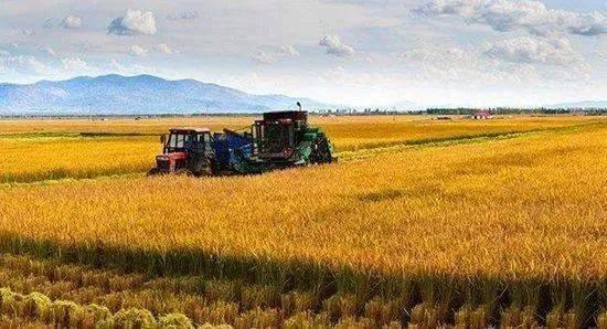 关于农业面源污染治理的实施方案