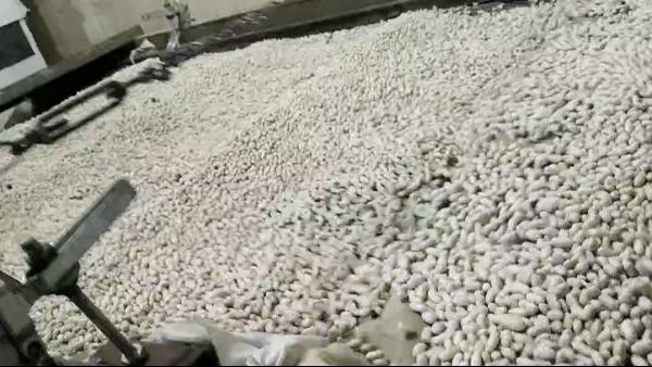 金威玛白豆生产线,产能上新台阶