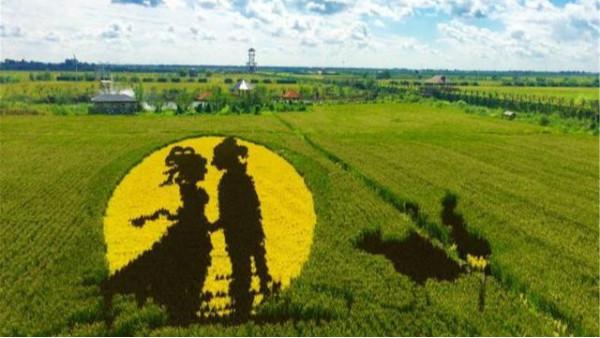 """创意农业产业的发展——""""稻田画"""""""