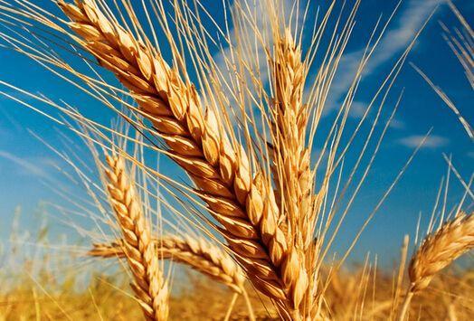 俄农业部:俄罗斯农产品在亚太地区最大的买家为中国