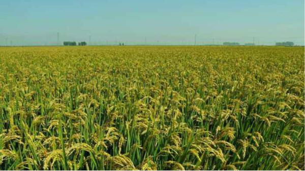 农业农村部取消和下放行政许可事项