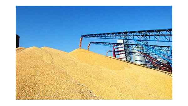 我国水稻种植亩产达到1326.77公斤,创世界新纪录
