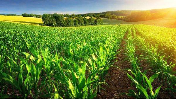 白马峰会:创新农业食品领域新场景应用