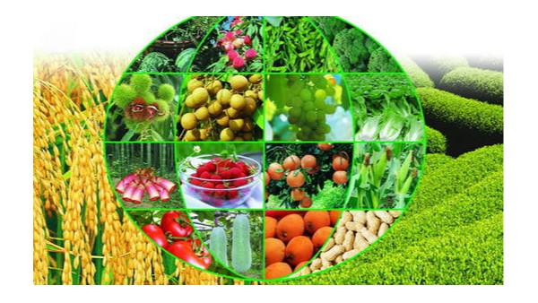 农业农村现代化保障了人民生活基础