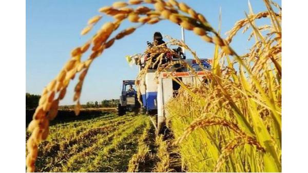 全面推动国家级农业制种基地转型升级
