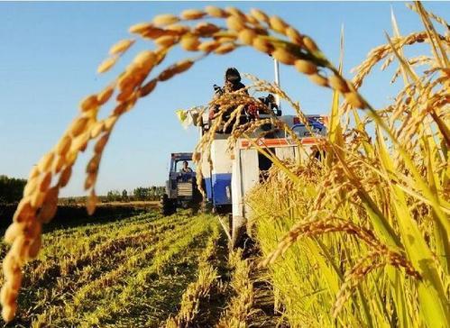 农业农村部:18个省份完成农村集体产权制度改革试点任务