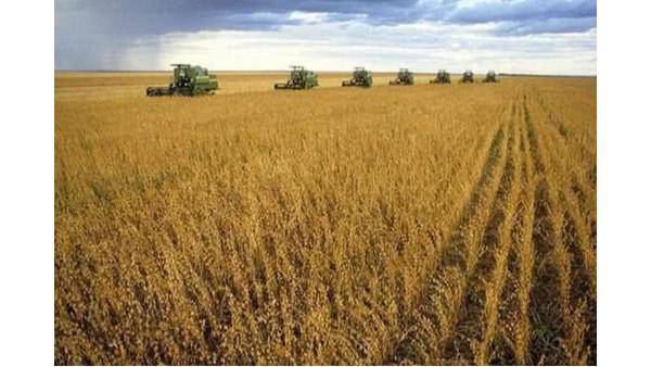 欧亚禁令解除,我国或将自俄罗斯等国进口大豆