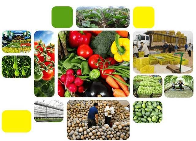 陕粤农产品营销县域合作,签订销售额近3亿元