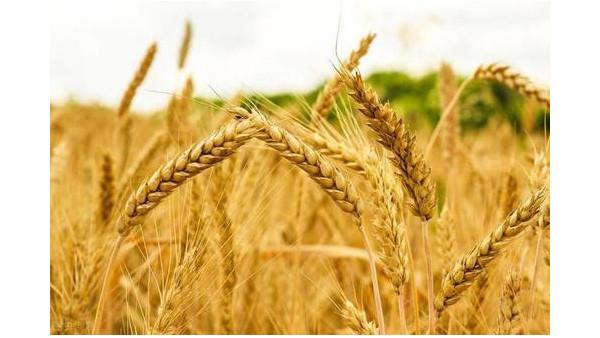 农业农村部:再部署秋粮作物重大病虫害防控工作