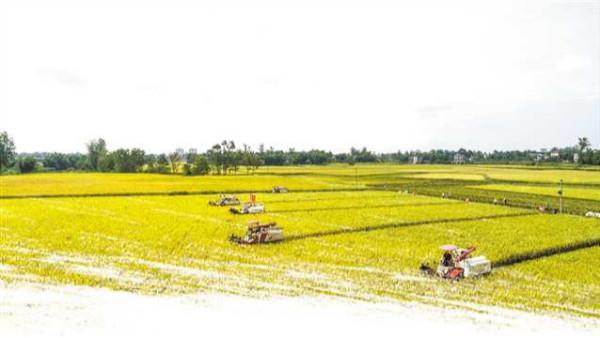 """农业农村部党组会议:扎实做好新发展阶段""""三农""""工作"""