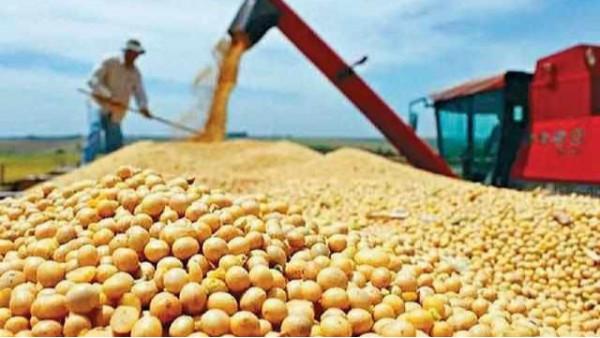 中国大豆为何不能自给自足?