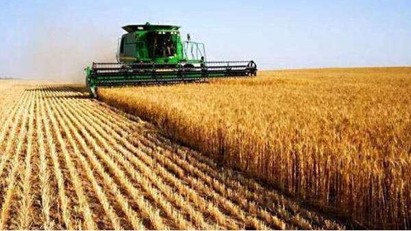 农业农村部:要确保粮食产量稳定 全力推进生猪稳产保供