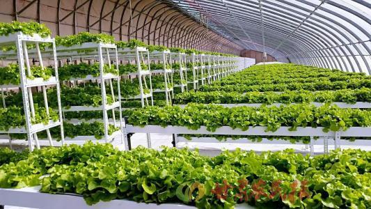 农业农村部:继续坚持农业绿色发展的方向