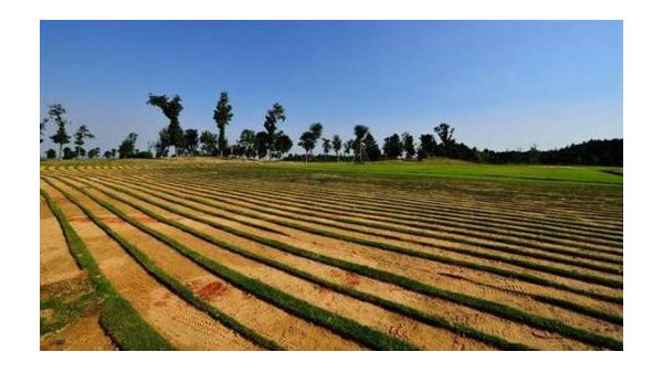 农业农村部将开展退化耕地治理试点