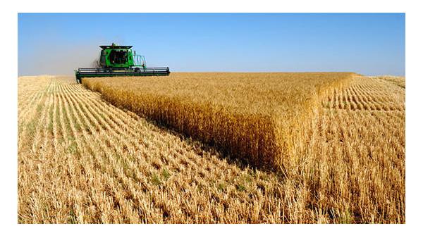 全国已收获小麦8000多万亩,确保夏粮丰收到位