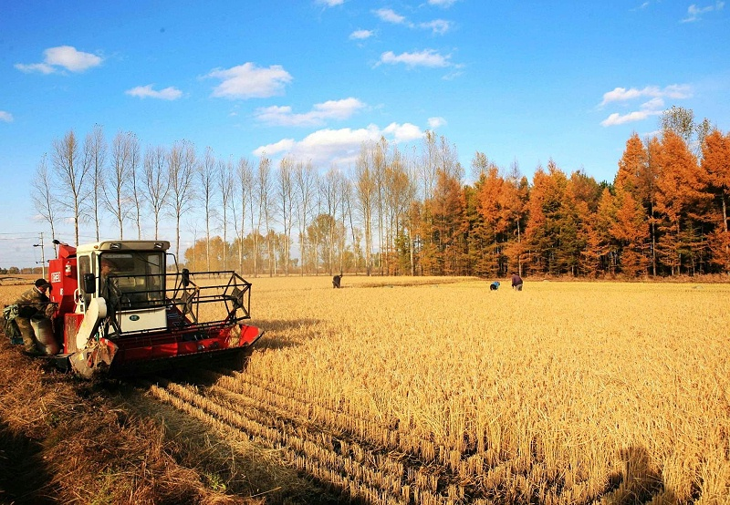 农业农村部:推动西北地区农业高质量发展