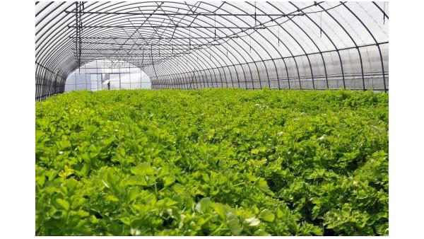 2020年上半年农业农村经济平稳发展