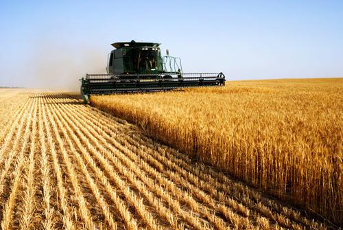 中巴经济走廊将推动巴基斯坦工农业发展
