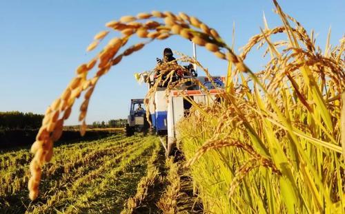 中央委员会:优先发展农业农村,全面推进乡村振兴