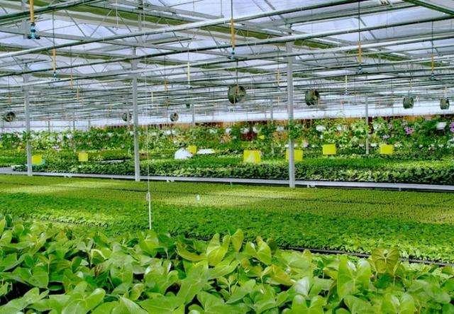 2020农业农村科技发展高峰论坛在南京举办