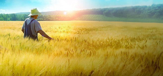 统筹利用撂荒地,促进农业生产发展